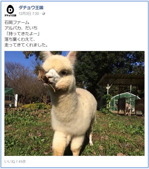 「ゆうパック」の新CMに出演するダチョウ王国石岡ファームの「だいち」くん.png
