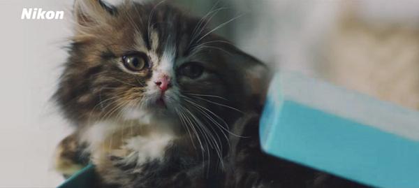 【動画】本田翼と猫がめっちゃ可愛い!ニコン「SnapBridge」スペシャルムービー公開!4.png